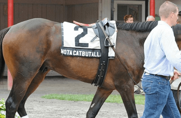 Horse Racing Names