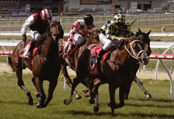 Lingfield Horse Racing park